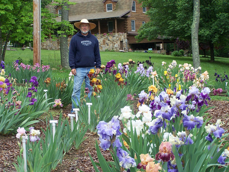 How irises grow Exline Iris Garden