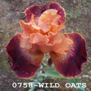 0758-Wild Oats
