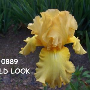 0889-Bold Look