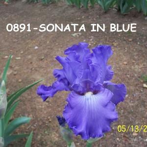 0891-Sonata In Blue
