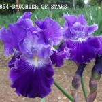 0894-Daughter Of Stars