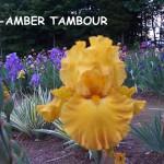 0969-Amber Tambour