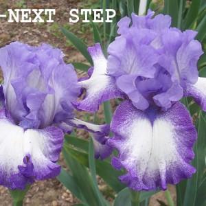 0998-Next Step