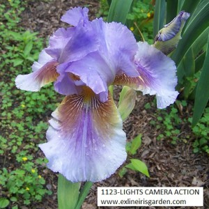 1123-LIGHTS CAMER ACTION-1