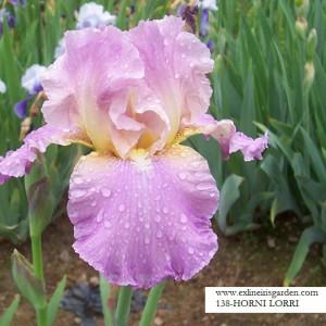 Iris Horny 101