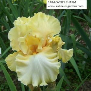 148-LOVER'S CHARM