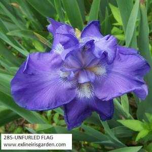 285-UNFURLED FLAG
