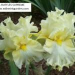309-RUFFLES SUPREME