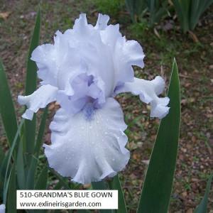 510-GRANDMA'S BLUE GOWN