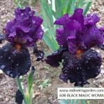 608-BLACK MAGIC WOMAN