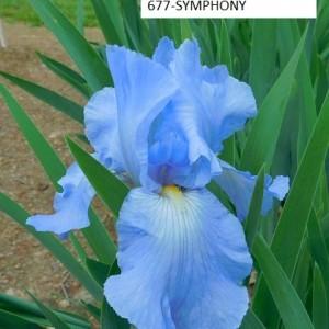677-SYMPHONY
