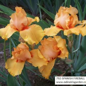 792-SPANISH FIREBALL-1