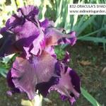 832-DRACULA'S SHADOW