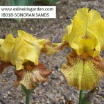IB018-SONORAN SANDS