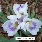 IB031-O'COOL-1