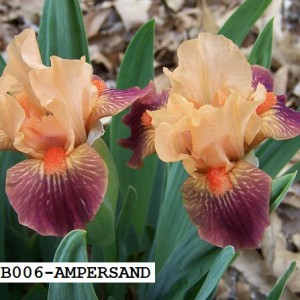 MDB006-AMPERSAND-1