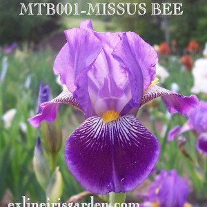 MTB001