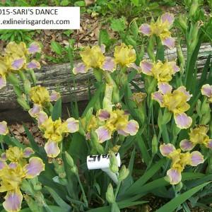MTB015-SARI'S DANCE-1