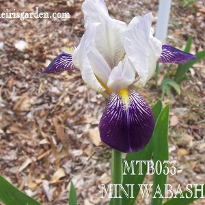 MTB033.JPEG