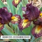 SDB030-DIDGERIDOO-2