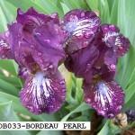 SDB033-BORDEAU PEARL