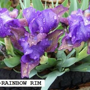 SDB061-RAINBOW RIM
