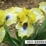 SDB063-EXPERIMENT-1