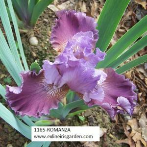 1165-ROMANZA