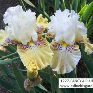 1227-FANCY A FLUTTER-3
