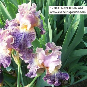 1238-ELIZABETHIAN AGE