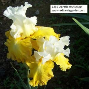 1256-ALPINE HARMONY