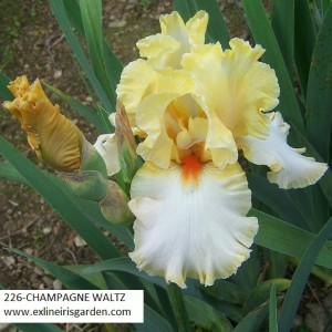 226-CHAMPAGNE WALTZ