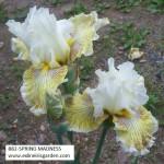 882-SPRING MADNESS