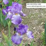 883-WISTERIA LANE